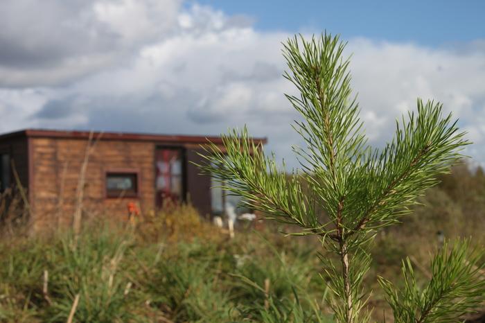 Посадили 120 сосенок Дача, Садоводство, Лес, Ландшафтный дизайн, Посадка Деревьев, Сосна, Саженцы деревьев, Длиннопост
