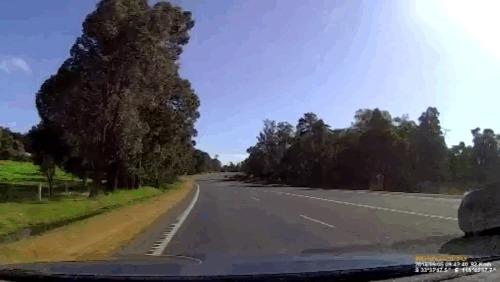 Вдруг откуда ни возьмись... Кенгуру, Австралия, Гифка