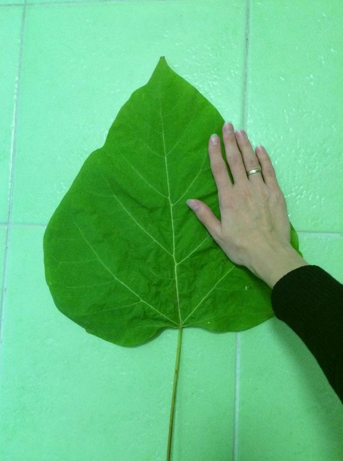 Осень, падают листы... Гигант, Лист