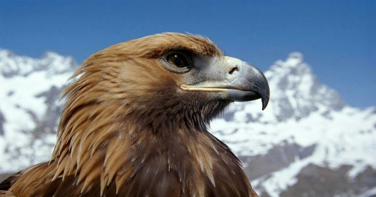 Анимация среда орел