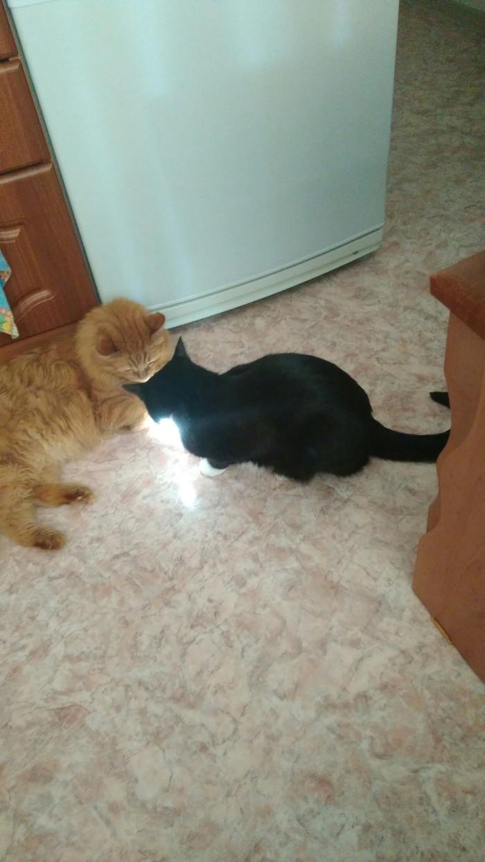 Кажется мои коты шабашат сварщиками
