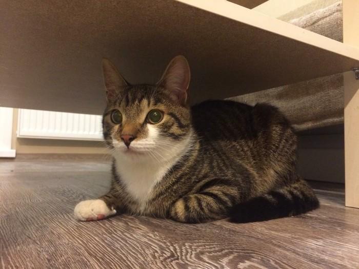 Отдается котейка Семён (Новосибирск) Найден кот, Новосибирск, Кот, Длиннопост, В добрые руки, Без рейтинга