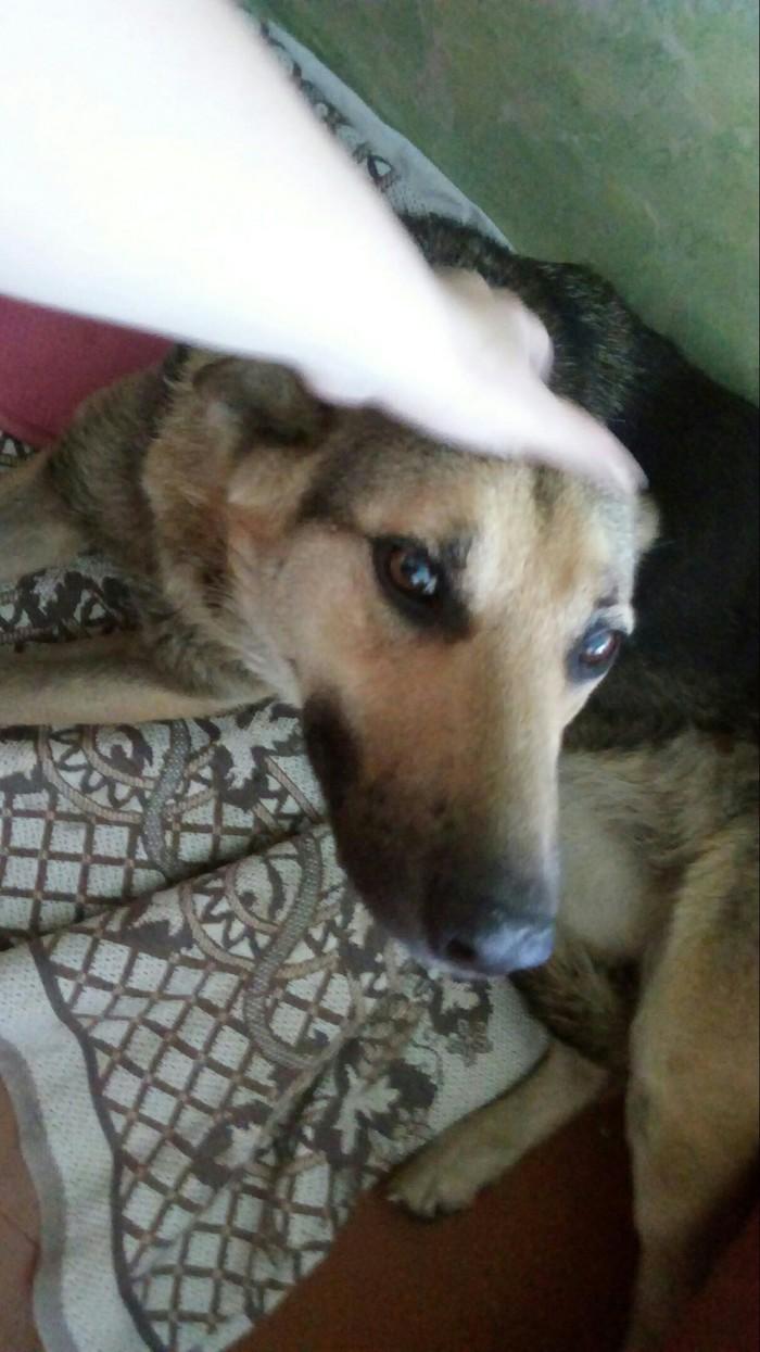 Ищем новых хозяев, Новокузнецк Без рейтинга, Собака, Помощь животным, Новокузнецк, Длиннопост