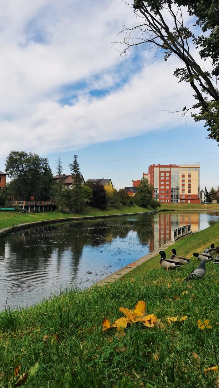 Зелёно-золотая осень Калининграда Городские пейзажи, Осень, Калининград, Листва, Балтика, Длиннопост