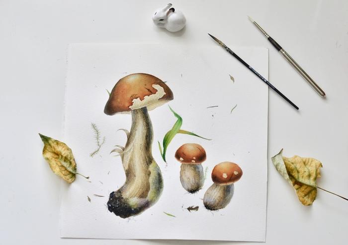 Грибы, акварель Акварель, Ботаническая иллюстрация, Арт, Рисунок, Грибы, Длиннопост
