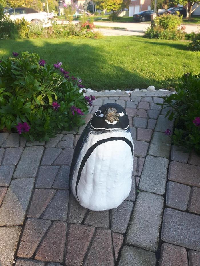 Пареньпринес с фестиваля тыкву, заявив, что она похожа на пингвина. Родственники с него посмеялись... Тыква, Фестиваль, Пингвины, Длиннопост