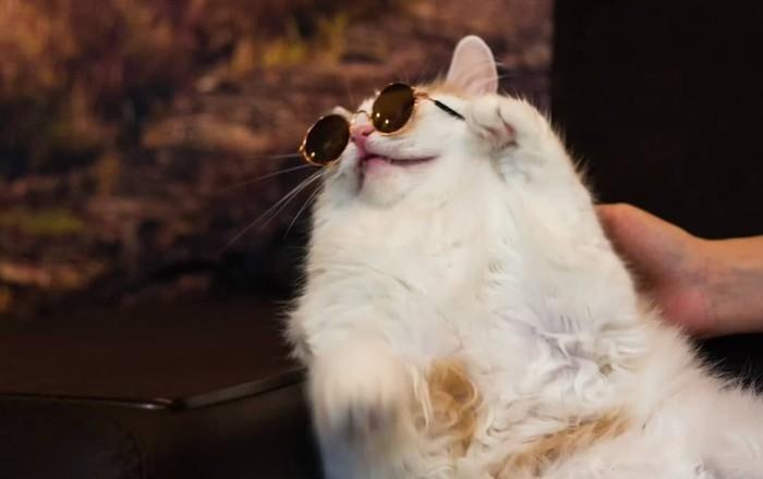 Мастер перевоплощения, он же кот Персик Кот, Очки, Котомафия, Животные, Пародия, Лепс, Фотография, Длиннопост