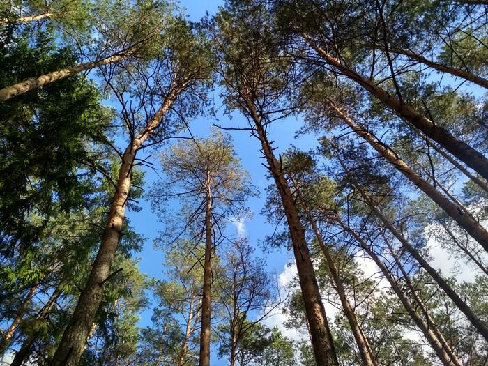 Красивого белорусского леса вам в ленту Лес, Красота природы, Красота, Грибы, Шишка, Природа, Длиннопост