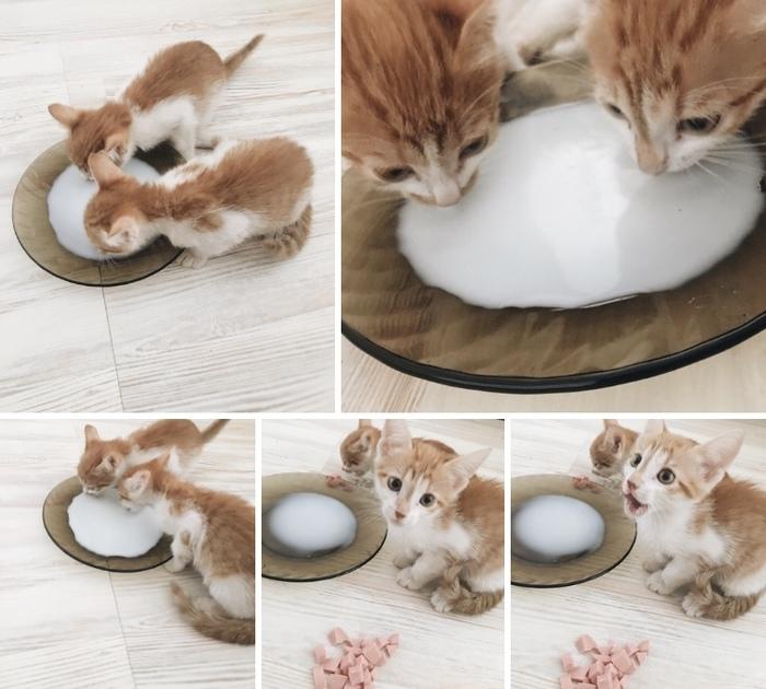 Найдены котята, теперь нужно найти хозяев Вологда, Котята, Помощь животным, Домашние животные, В добрые руки, Без рейтинга, Кот