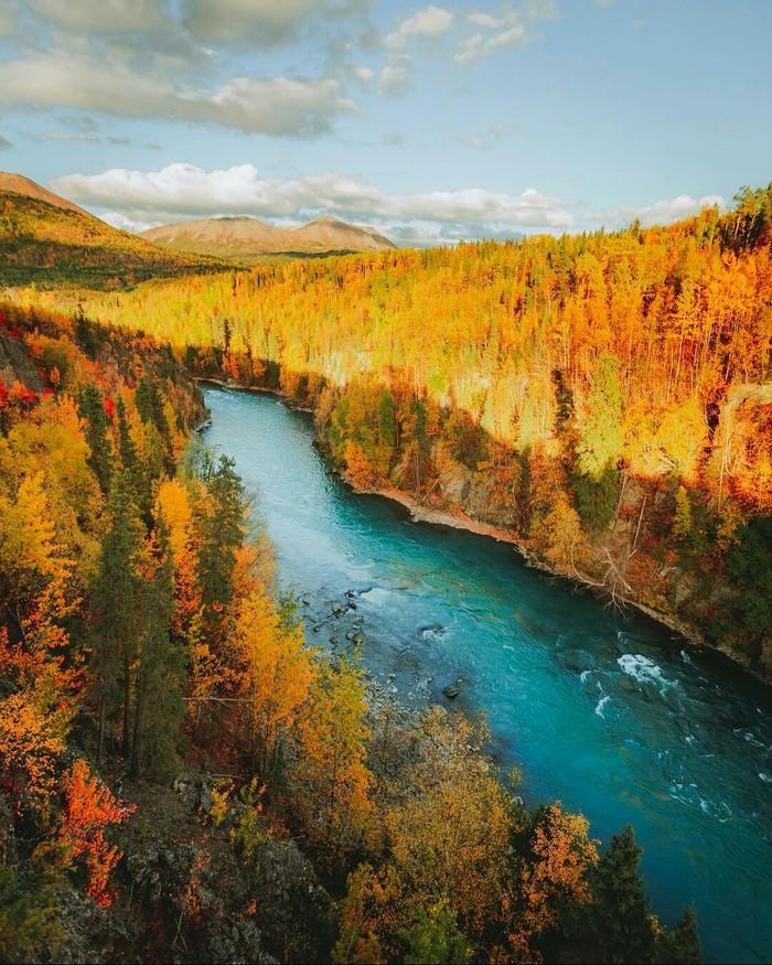 Осень на Аляске. Река, Америка, США, Природа, Аляска, Осень, Красота природы, Фотография, Длиннопост