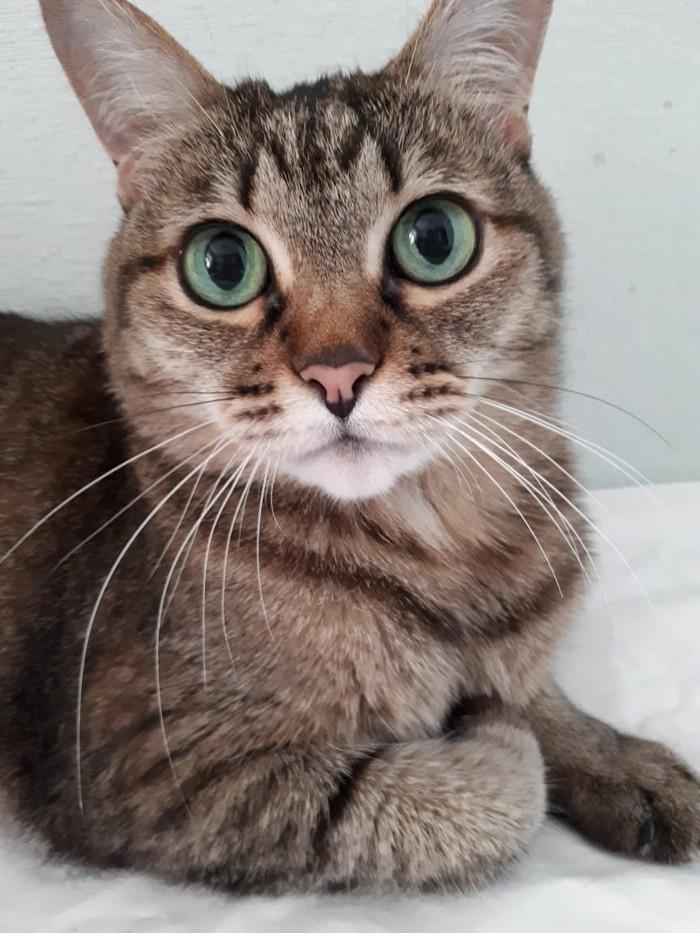 Шуня Кот, Домашние животные