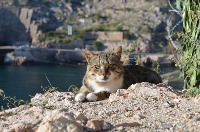 Кот и море. Кот, Море, Балаклава, Фотография