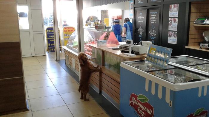 За колбаской. Собака, Милота, Магазин, Колбаса