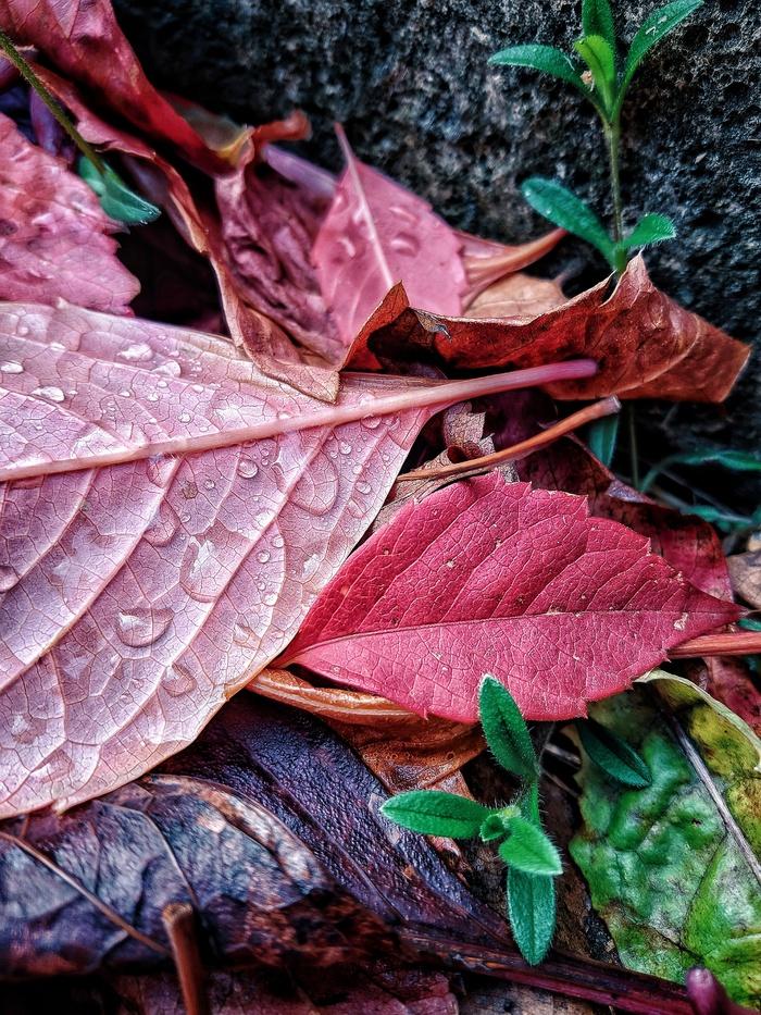 Осень Осень, Фотография, Красота, Природа, Длиннопост