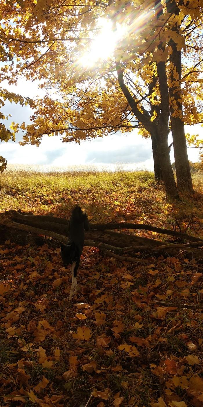 Золотая осень Моё, Осень, Собака