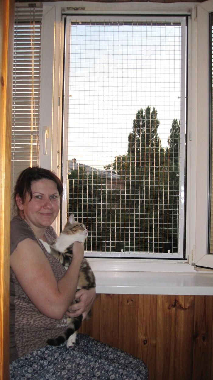 Как защитить кошку от выпадения из окна? Кот, Антикошка, Защита животных, Кошка упала, Длиннопост