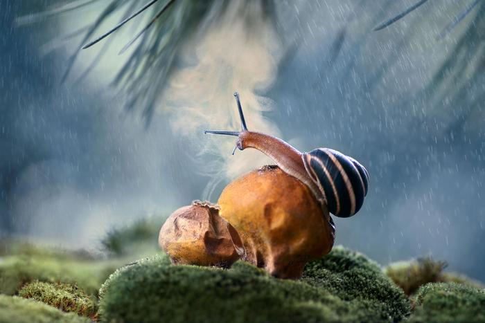 Крутейшее Макро отАнны Чернобай Макро, Насекомые, Фотография, Анна Чернобай, Длиннопост