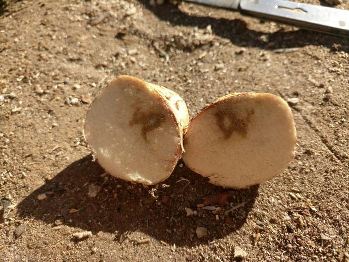 Помогите опознать гриб. Часть 2 Без рейтинга, Что за?!, Грибы, Фотография, Природа, Лес