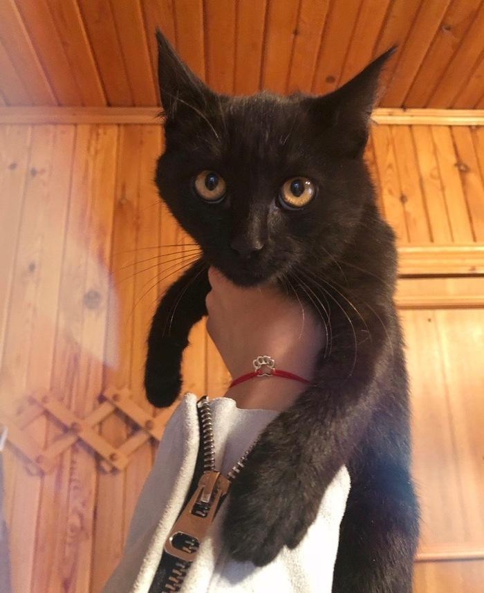 Котята в добрые руки Без рейтинга, Кот, Котята, В добрые руки, Москва, Животные, Длиннопост