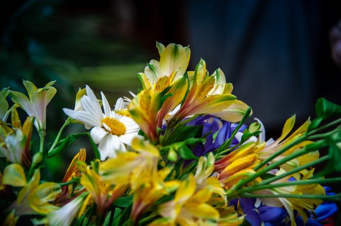 Моменты флористики ч.4 Флористика, Kazanflowerschool, Havikozoki, Фотография, Цветы, Длиннопост