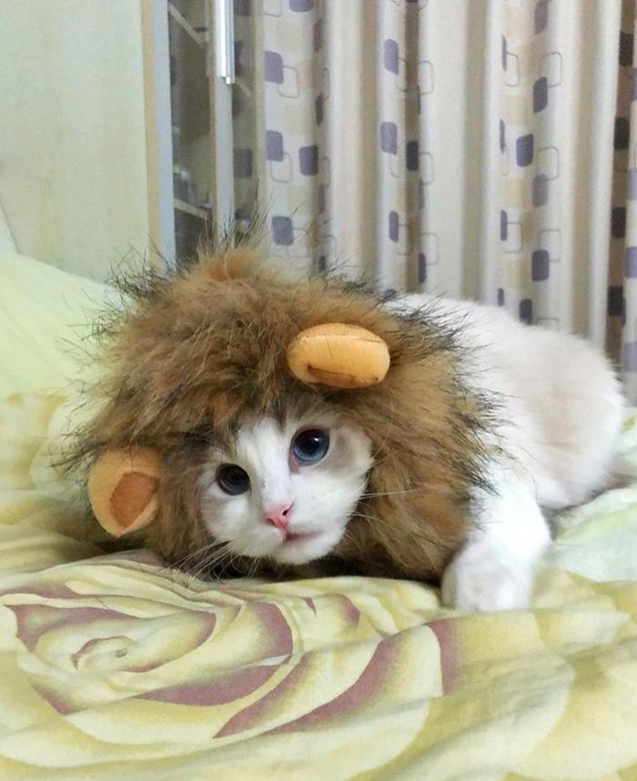 Маленький львёнок..