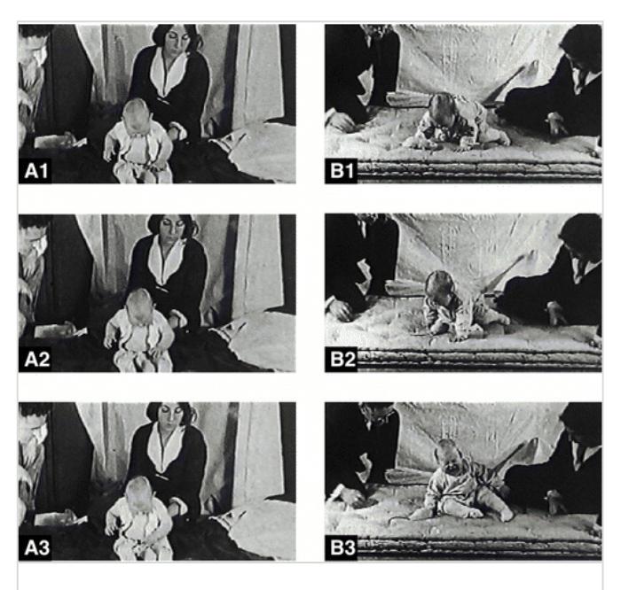 Жёсткий психологический эксперимент над ребенком ! Эксперимент, Альберт, Психология, Психологическая травма, Длиннопост, Наука, Исследование