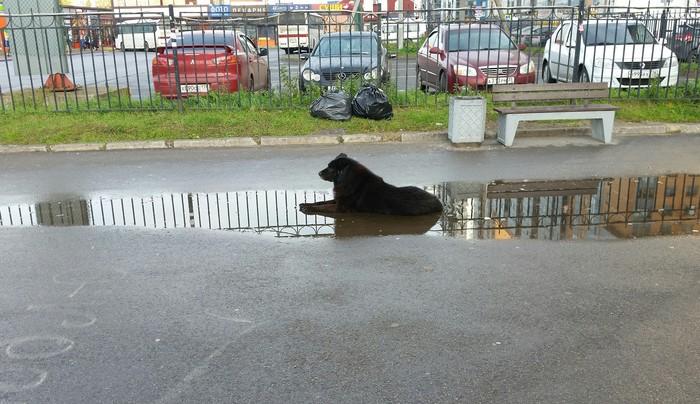 Собака Собака, Санкт-Петербург, Лужа