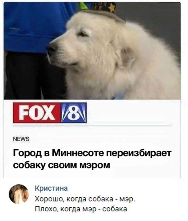 Собака - мэр человека!