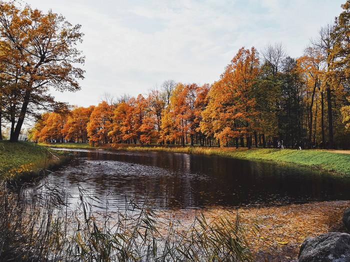 Осень в Царском Селе Санкт-Петербург, Пушкин, Царское село, Фотография, Осень, Длиннопост