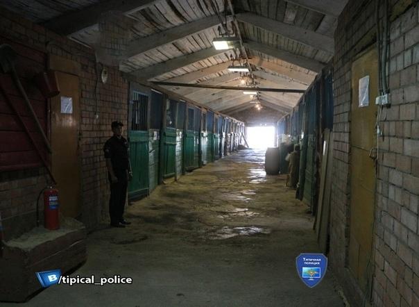 В полиции Саратова за минувший месяц погибли от голода два коня 20-летний Зарок и 10-летний Торнадо. Саратов, Коррупция, Голод, Животные, Кони, Негатив, Без рейтинга, Длиннопост