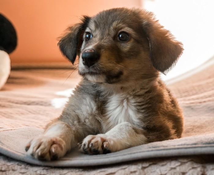 Привет Пикабу очень надеюсь на вашу помощь и силу!) Собака, Жесть, Помощь животным, Владивосток Приморский Край, Длиннопост