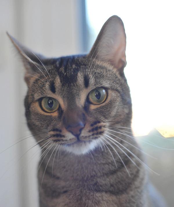 Эмоции кота Кот, Эмоции, Гифка, В паре кадров