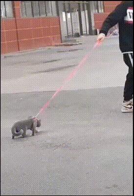 Когда не хочется гулять...