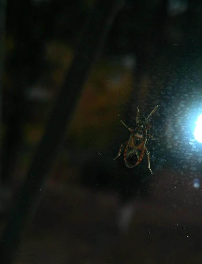 Что за насекомое? Домашнее насекомое, Помощь, Что за зверь