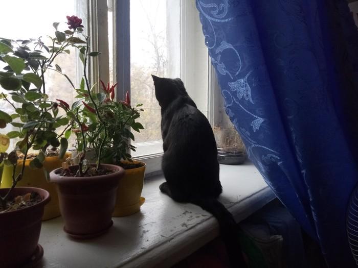 Первый снег. Черный кот, Осень, Фотография, Кот