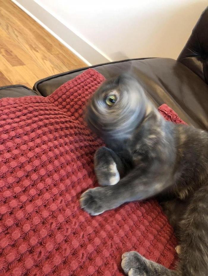 Реактивный кот