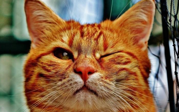 Рыжий-бесстыжий. Про кота и про любовь Кот, Котомафия, Романтика, Любовь, Доброта, Длиннопост