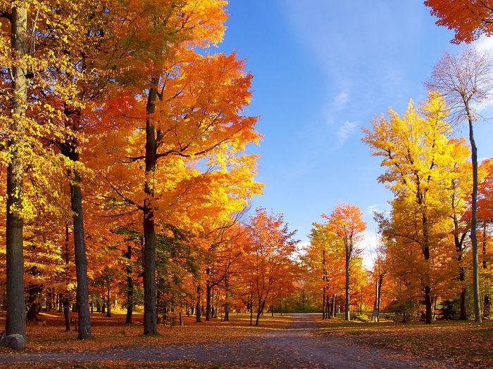 Урок Урок, Школа, Литература, Правда, Ложь, Сочинение, Шоколад, Осень