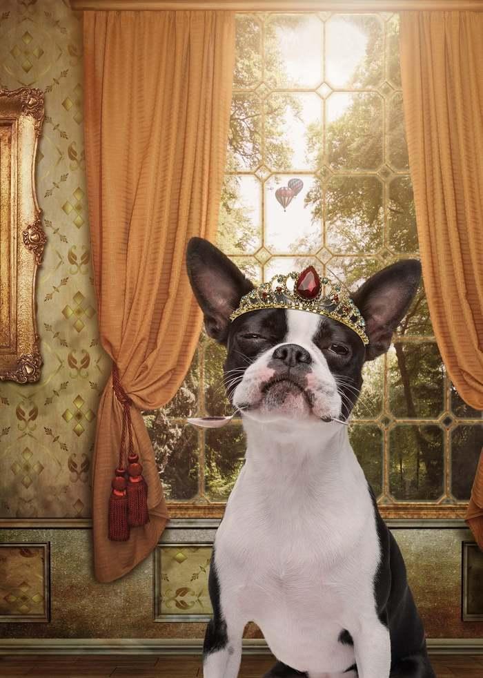 Человеческие образы для двенадцати собак и кота Обработка фотографий, Длиннопост, Мельбурн, Белинда Ричардс, Собака, Кот