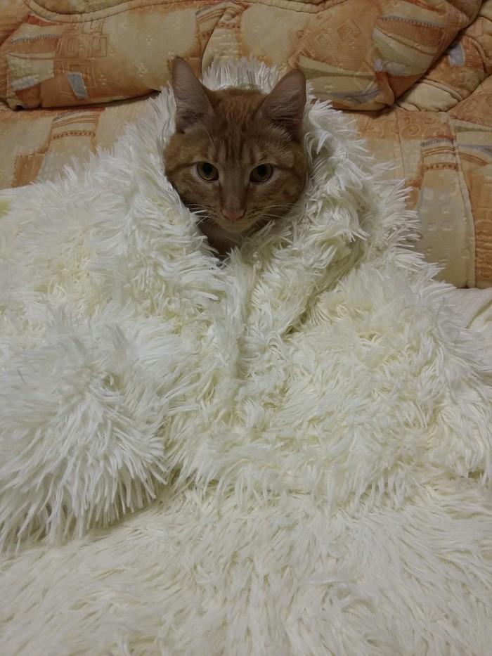 Смотри, какой важный курица! Кот, Котомафия, Царь во дворца, Король севера