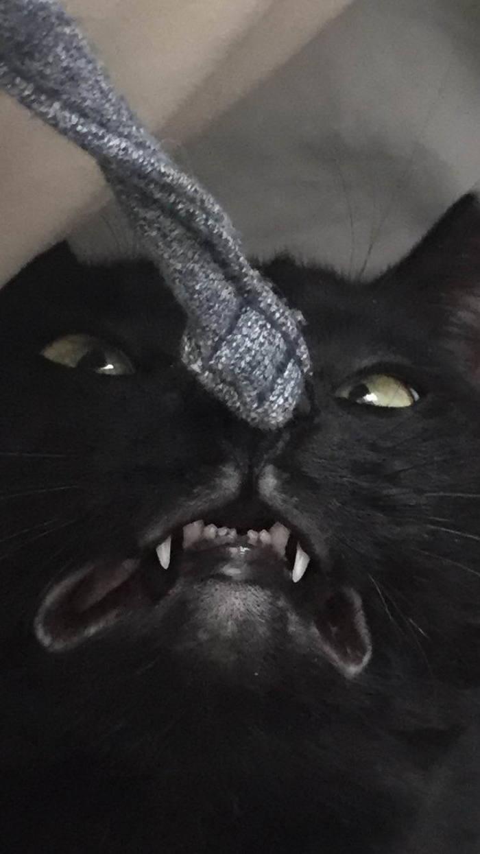 О да-а-а-а. Кот, Удовольствие, Длиннопост