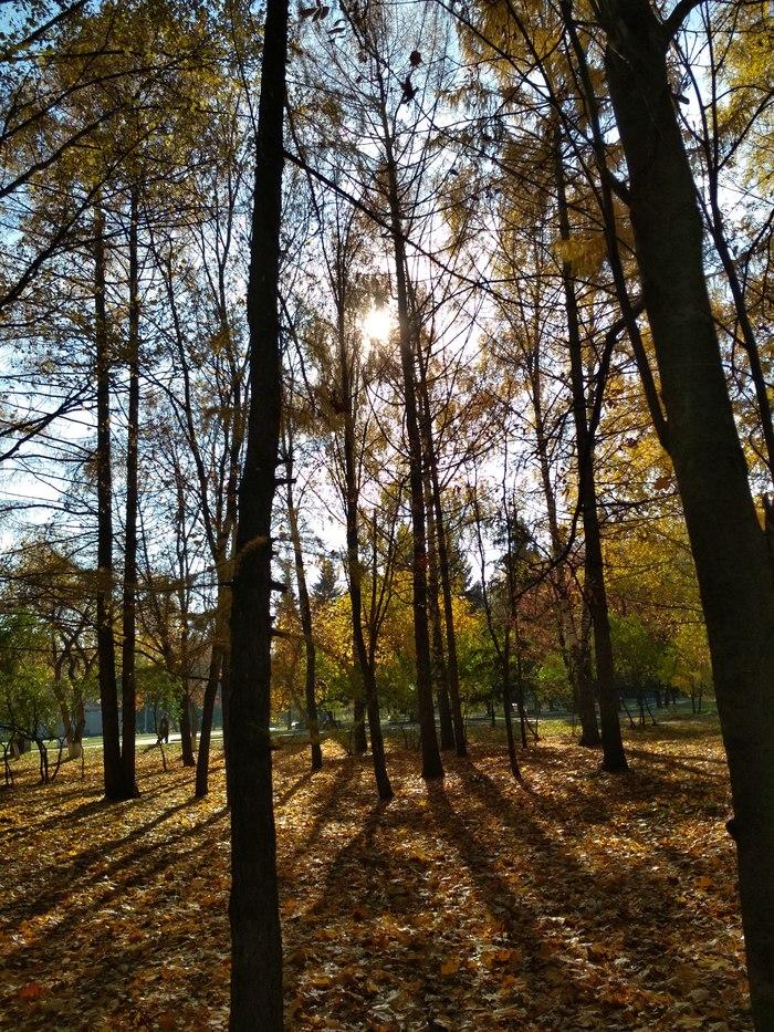 Моя золотая осень