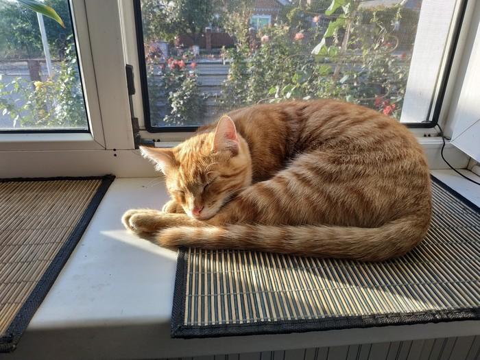 Солнечные ванны для кота