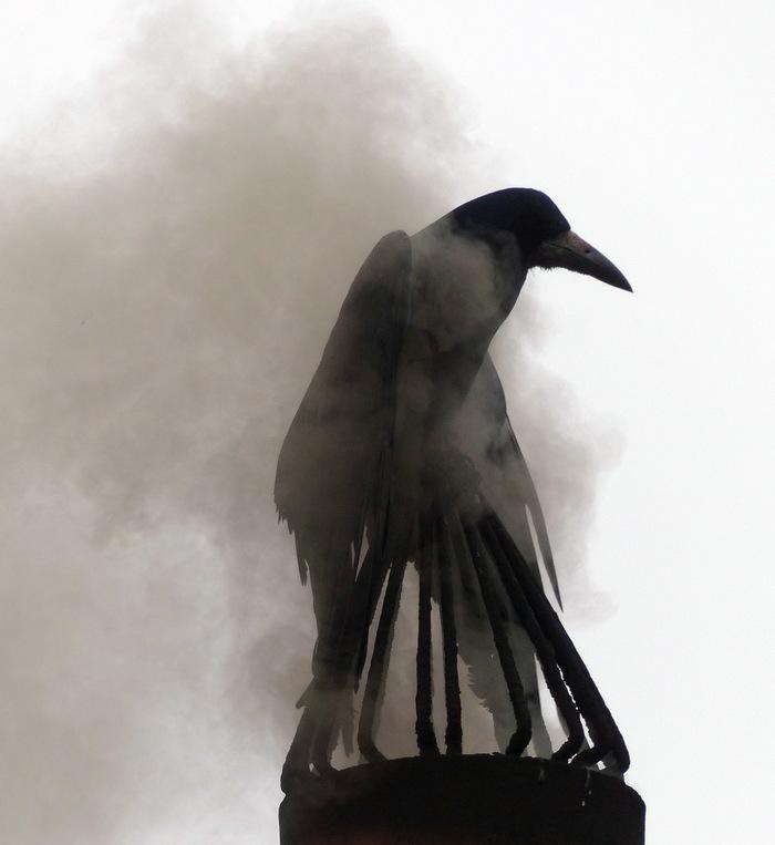 А тут тепло... Ворона, Труба, Дым, Ворон