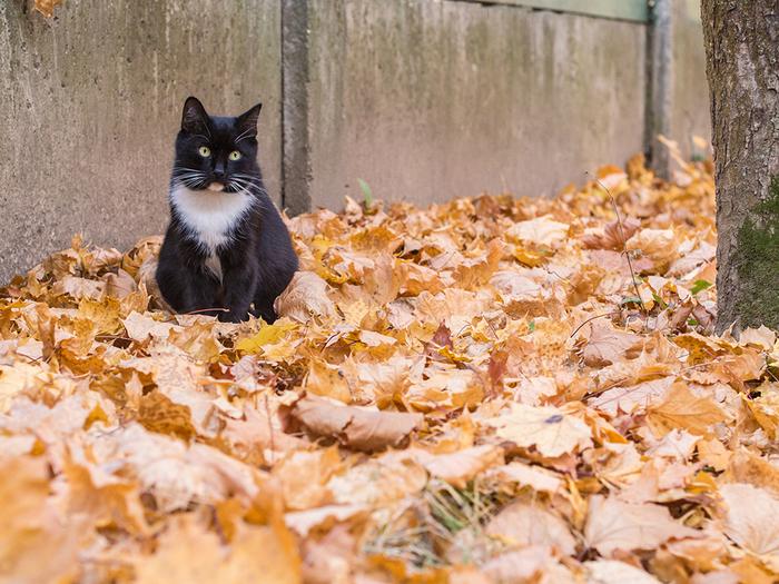 Шуршит октябрь