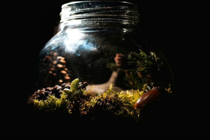 Маленький лес Лес, Мох, Экосистема, Вечный террариум, Террариум, Растения