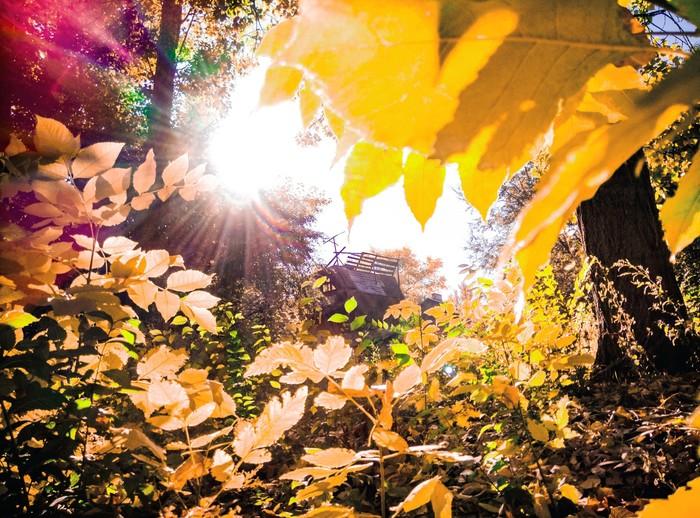 Солнце светит совсем по-летнему Фотография, Телефон, Осень