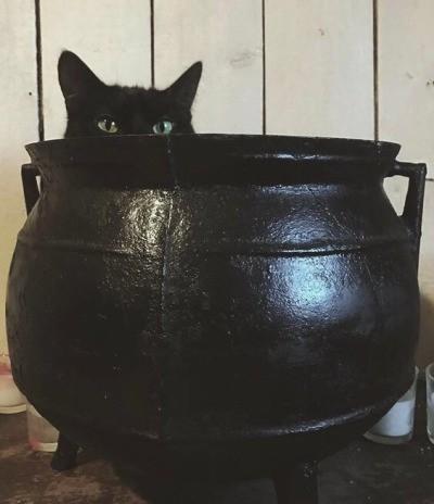 Хеллоуинские коты Кот, Котел