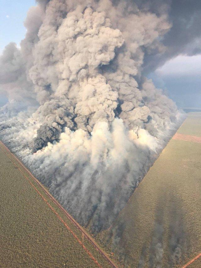 Пожар в Австралии Огонь, Эвкалипт, Пожар, Австралия