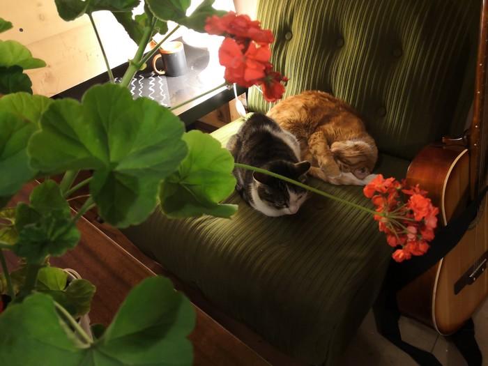 Тёплые осенние кошки